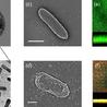 Nanaomaterials, Nanocomposites, Nanotechnology, Nanoprinting