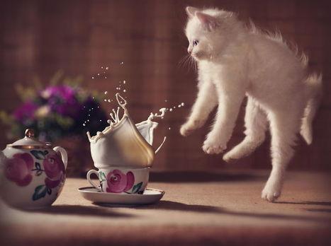 Ces 15 photos devraient vous convaincre que les chats sont en réalité des ninjas... | La Photographie est ma vision par Cédric DEBACQ | Scoop.it