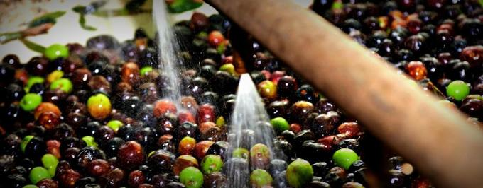 Researchers Convert Olive Mill Wastewater for Practical Uses
