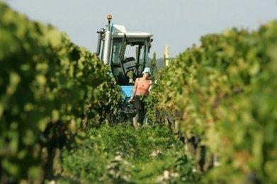 Vignes et vin : la récolte 2013 encore révisée à la baisse dans le Sud-Ouest   Le vin quotidien   Scoop.it