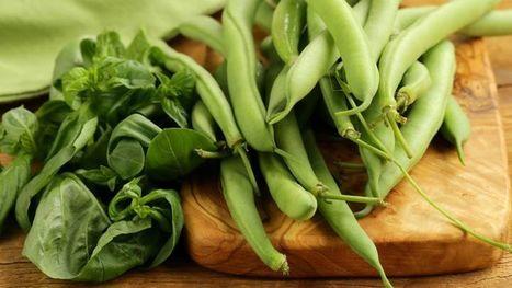 Mettez les haricots à l'honneur dans votre jardin | Végétarisme, alternative alimentaire | Scoop.it
