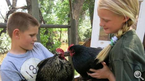 Agritourism a growing opportunity on the farm - NPR | Tourism Today & Tomorrow | Scoop.it