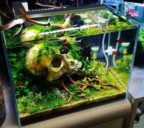 Desain Akuarium Ruang Tamu  26 model aquarium ikan hias minimalis terbaru 2