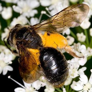 Bees, plants waking up earlier each spring | Food issues | Scoop.it