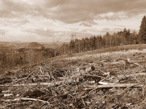 Tree Gangsters Are Killing the Rainforest | HINGOL NATIONAL PARK! | Scoop.it
