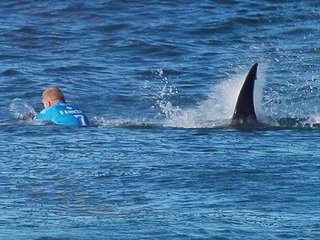 Australian Irish surf champ escapes shark attack by punching him back (VIDEO ... | Diverse Eireann- Sports culture and travel | Scoop.it