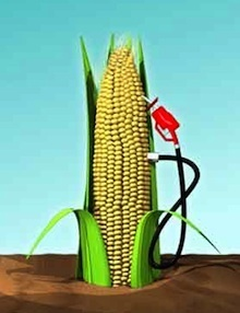 More Corn is Used For Ethanol in U.S. Than For Food or Feed — The Top Five Reasons We Should Stop This Madness | The Great Transition | Scoop.it