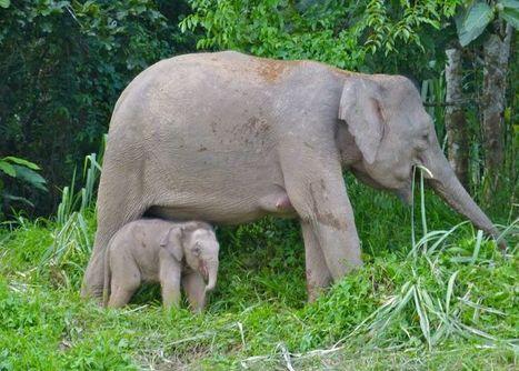 elefantes\' in Pangea | Scoop.it