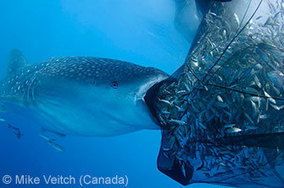 Wildlife Photographer of the Year 2013 - World in Our Hands   Ocean News   Scoop.it