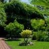 All Summer Lawns