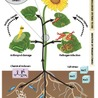 Cool tidbits about plants