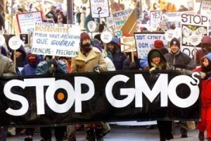 Monsanto fails at attempt to explain away tumors caused by GM corn | Pesticides ingestible | Scoop.it