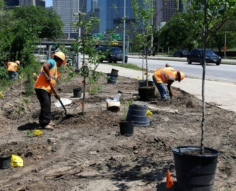 Not All Tree Planting Programs Are Great for the Environment | Sustainable Futures | Scoop.it