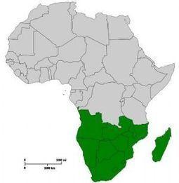 Afrique en marche - Afriquinfos.com | Agribusiness | Scoop.it