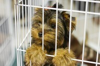 Puppy Mill Red Flags - Don't Be an Accidental Supporter | Animal Health | Scoop.it