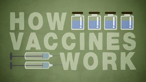How do vaccines work? - nice animation by Kelwalin Dhanasarnsombut -   Immunopathology & Immunotherapy   Scoop.it