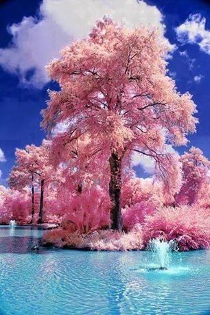 Tweet from @PictureEuphoria | A Love of Japanese Gardens | Scoop.it