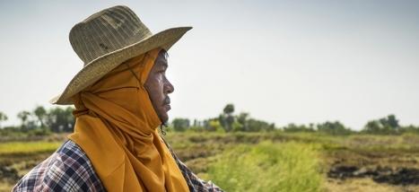 « L'idée que l'agro-industrie est plus efficace que l'agriculture familiale est un mythe »   Sustainable imagination   Scoop.it