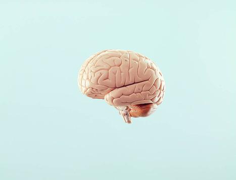 Brain rules : les 12 lois du cerveau | Fonctionnement du cerveau & états de conscience avancés | Scoop.it