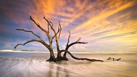 Cambio climático: ¿Tan peligroso como el terrorismo? | Agua | Scoop.it