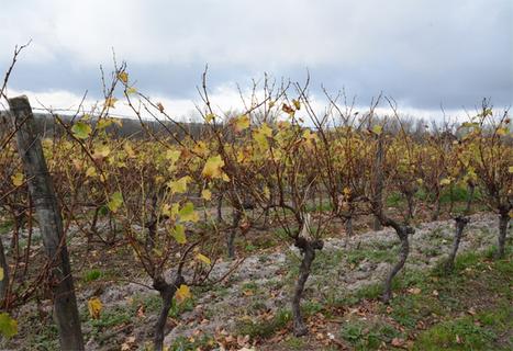 Référentiel Viticulture Durable Cognac - Objectif : 100% des viticulteurs engagés d'ici 5 ans | Le Vin et + encore | Scoop.it
