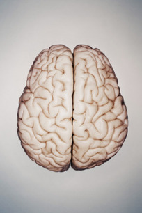 Understanding How the Brain Speaks Two Languages | TIME.com | Psychology and Marketing | Scoop.it