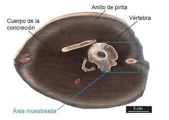 Ictiosaurio reproduccion asexual de las plantas