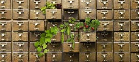 'Seed libraries' try to save the world's plants - Boston Globe | Agricultural Biodiversity | Scoop.it