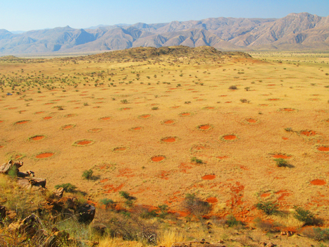What's Behind The 'Fairy Circles' That Dot West Africa? : NPR | Insight and Understanding | Scoop.it