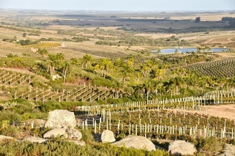 Uruguayan wine sees UK sales boost | Autour du vin | Scoop.it