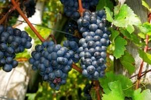 Top 10 des plus belles routes des vins du monde | Vins, oenotourisme, wine & passion. | Scoop.it