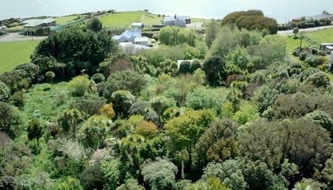 Exploring a beautiful, 23-year-old food forest in New Zealand (Video)   Gaia Diary   Scoop.it