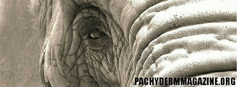 Baby Elephant in Thailand nursed back to health | Pachyderm Magazine | Scoop.it
