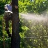 Franks Stump Grinding and Tree Service