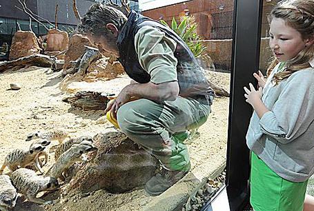 Meerkat medicine | Australian Culture | Scoop.it