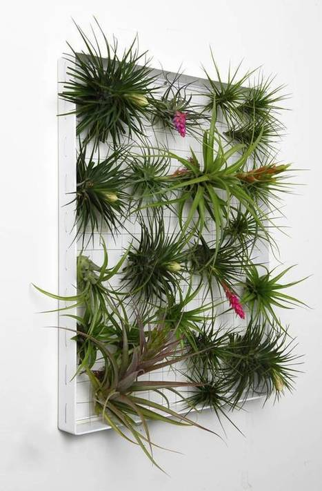 AirplantFrame: Recyclable frames create a living wall of air plants | MishMash | Scoop.it