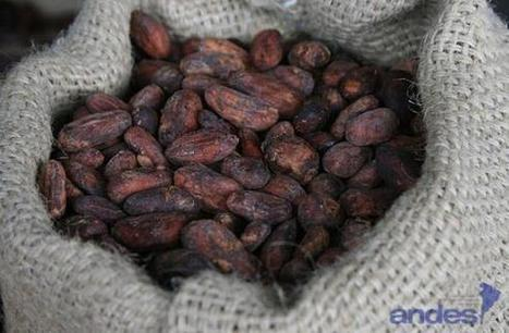 Ecuador's cocoa exports experience significant increase   Fairly Traded News   Scoop.it