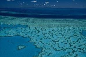 La grande barrière de corail contaminée par des pesticides | Toxique, soyons vigilant ! | Scoop.it