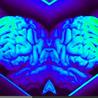 The Brain-Friendly Classroom
