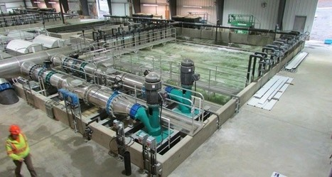 First fish enter Marine Harvest hatchery | Aquaculture Directory | Aquaponics~Aquaculture~Fish~Food | Scoop.it