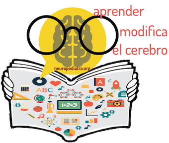 aprender modifica el cerebro | Aprender y educar | Scoop.it