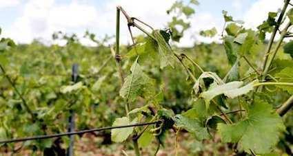 Vin : la grêle va peser sur les ventes de Bourgogne - Les Échos | Le commerce du vin, entre mythe et réalité | Scoop.it