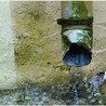 Greenserve Property Maintenance