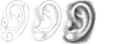 Insights Into An Ear Drawing Tutorial Drawi