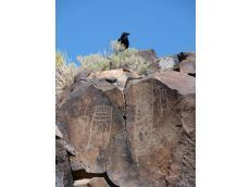 Get a glimpse of ancient petroglyphs - Victorville Daily Press | Native Americans and Mesopotamia | Scoop.it