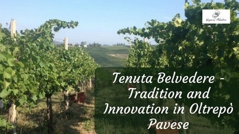 Tenuta Belvedere - Tradition and Innovation in Oltrepò Pavese | Wine, history and culture... | Scoop.it