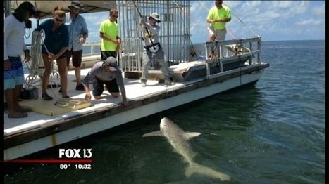 With new technology, scientists track every move of sharks   All about water, the oceans, environmental issues   Scoop.it