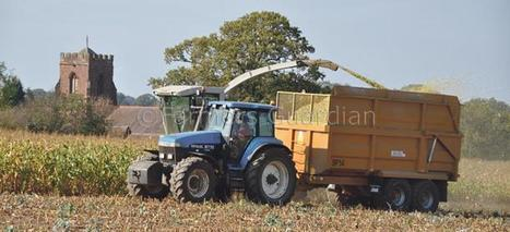UK: Maize Watch - October 2011 | Information | Farmers Guardian | MAIZE | Scoop.it