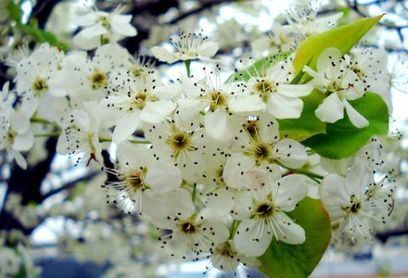 Art : Beautiful Spring Photography for Your Inspiration « Web Design Tutorials and Inspiration | Learn Photoshop Online | Creative Inspiration | Web Resources | Méli-mélo de Melodie68 | Scoop.it