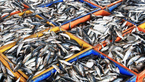 U.S. Fishermen Throw Away 2 Billion Pounds Of Fish A Year - Co.Exist | Marine Conservation | Scoop.it